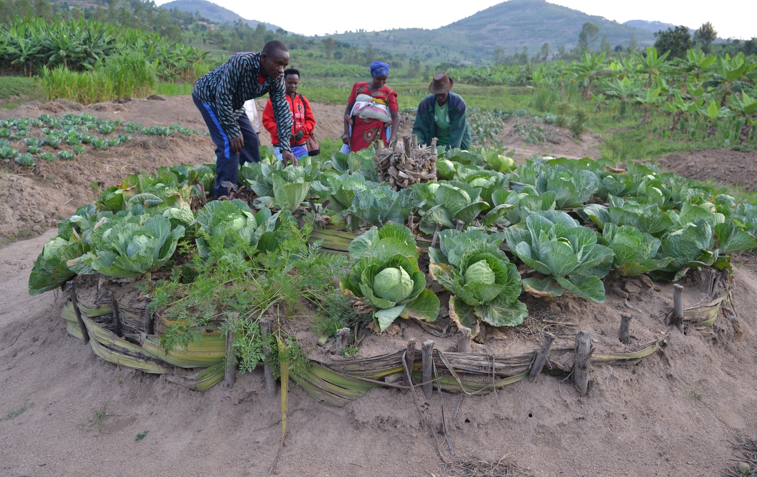 Supported families produce vegetables through kitchen gardens