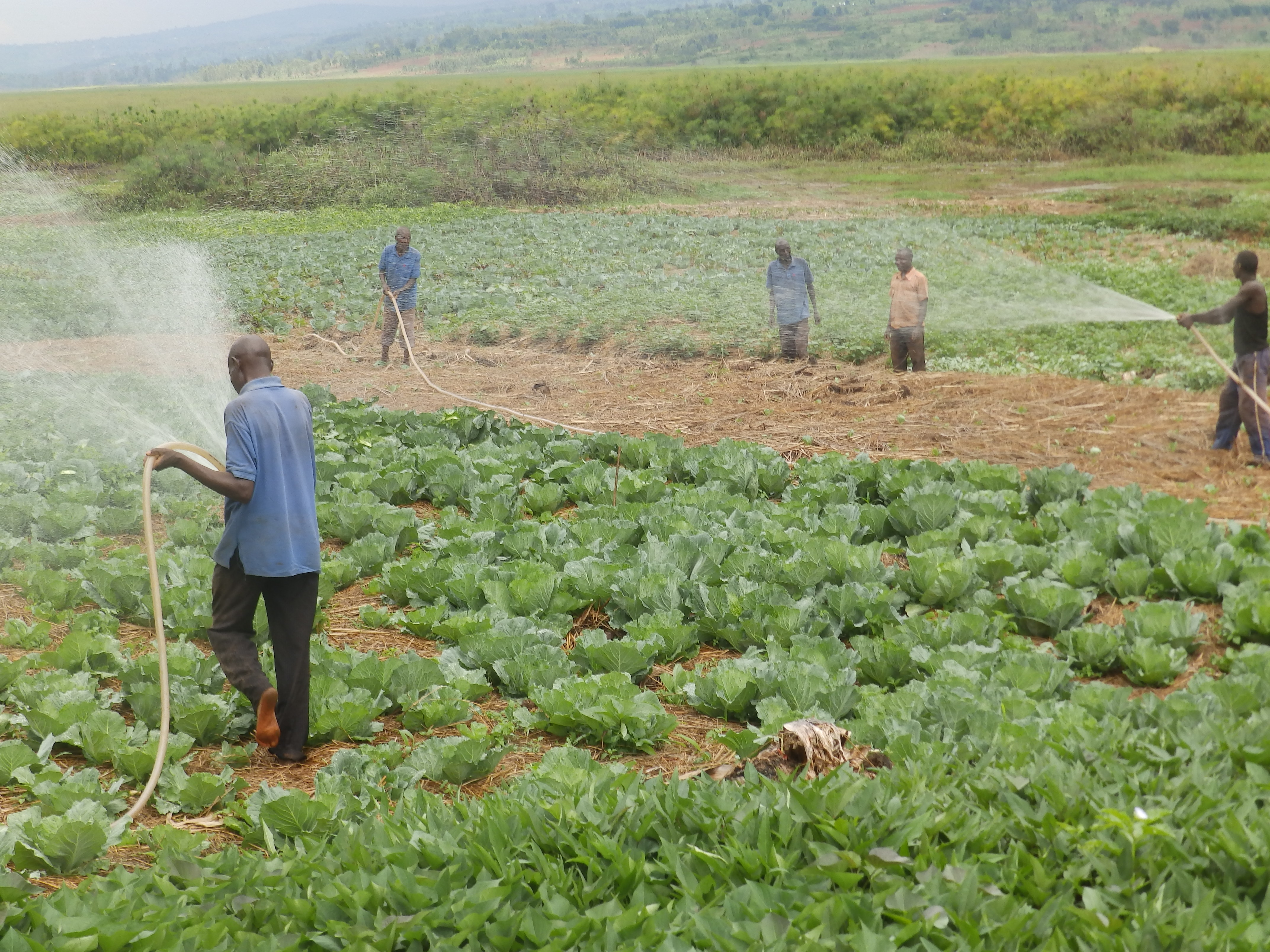 smallholder farmers play a critical role to build resilient food systems