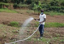 Now they can cultivate anytime even in the dry season